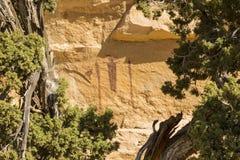Tête des arbres de panneau et de genévrier de Sinbad Image libre de droits