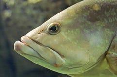 Tête des poissons Photos libres de droits