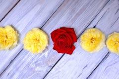 Tête des roses sur un fond en bois blanc photo libre de droits
