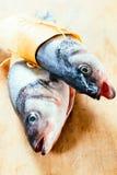 Tête drôle de poissons Images libres de droits