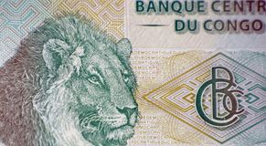 Tête du ` s de lion Image libre de droits