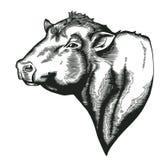 Tête du taureau de la race de dangus dessiné dans le style de gravure sur bois en vintage Animal de ferme d'isolement sur le fond illustration stock