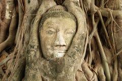 Tête en pierre de Bouddha image stock