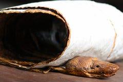 Tête et peau de serpent Photo libre de droits