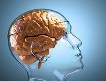 Tête humaine en verre avec le cerveau Image stock