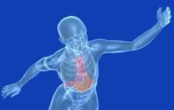 Tête humaine médicale de l'illustration 3d, fond stylisé et bleu illustration stock