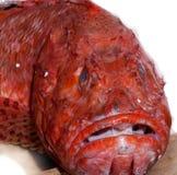 Tête malheureuse chargée triste de poissons Images stock