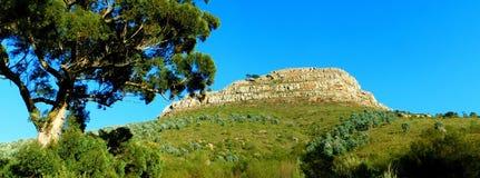 Tête Mountain View du ` s de lion Images libres de droits