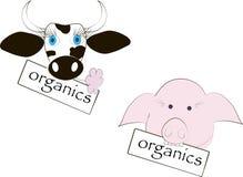 Tête noire et blanche de vache, yeux bleus, fleur rose, la tête du porc rose, l'inscription des produits organiques Photos libres de droits