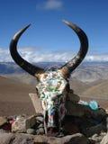 Tête peinte de yaks Image libre de droits