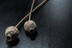 Tête sèche de pavot sur le fond noir foncé Usines d'opium image stock