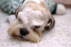 Tête somnolente Photo libre de droits