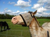 Tête vers le haut de cheval image libre de droits