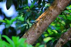 Tête verte de caméléon se trouvant sur le clitoris après pluie Photo stock