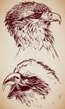 têtes d'aigle Illustration Libre de Droits