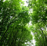 Têtes d'arbres Photographie stock libre de droits