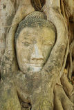 Têtes de Bouddha Photos libres de droits