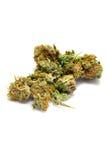 Têtes de cannabis Image libre de droits