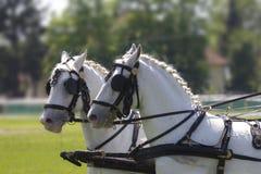 Têtes de cheval Images stock