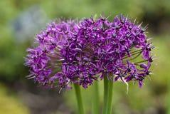 Têtes de fleur Photo libre de droits