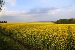Têtes de fleur de canola de gisement de graine de colza en Allemagne Images libres de droits