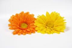Têtes de fleur d'isolement Images stock