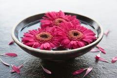 Têtes de fleur dans la cuvette de l'eau Images stock