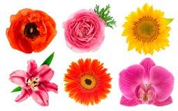 Têtes de fleur simples Lis, orchidée, ranunculus, tournesol, gerber Photo stock