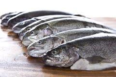 Têtes de poissons Photo libre de droits