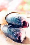 Têtes de poissons Photos stock