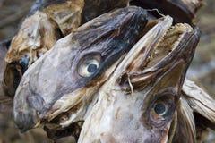 Têtes de poissons arrêtées pour sécher. Photos stock