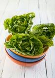 Têtes fraîches de salade verte dans des cuvettes de couleur Images stock