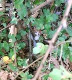 tímido-mirada del gatito imagenes de archivo