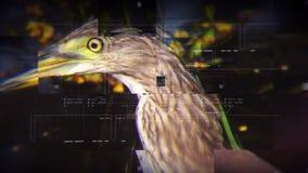 Título documental de la fauna con especie de animales tal como insecto del pájaro del reptil del mamífero en fondo de la tecnolog libre illustration