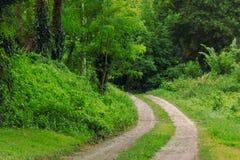 Título velho da estrada através da floresta grossa Imagem de Stock Royalty Free
