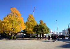 Tóquio, Japão - 22 de novembro de 2013: Os visitantes apreciam árvores coloridas Imagens de Stock