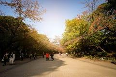 Tóquio, Japão - Noveber 9, 2017: Paisagem do outono no parque de Ueno imagem de stock