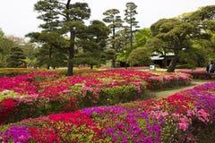 Tóquio, Japão, parque imperial do palácio Fotos de Stock Royalty Free