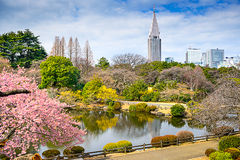Tóquio na mola Imagens de Stock Royalty Free