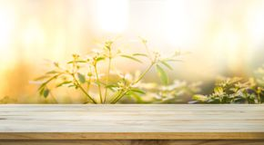 Töm av den wood tabellöverkanten på suddighet av den nya gräsplanträdgården Fotografering för Bildbyråer