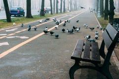 Töm bänken på en trottoar royaltyfria foton