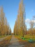 töm parken Royaltyfria Foton
