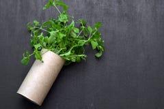 Töm rullar av toalettpapper med växten inom Arkivbild