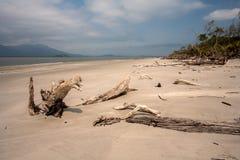 Töm stranden med stammar i sanden i Brasilien royaltyfri bild