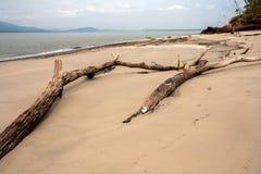 Töm stranden med stammar i sanden i Brasilien royaltyfri fotografi
