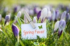 Töpfe Gänseblümchen und Viola mit Kelle, Landwirt und Gießkanne auf bebautem Boden Stockbilder
