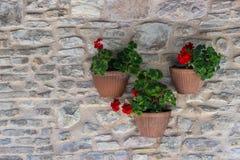 Töpfe rote Pelargonien, die an einer Backsteinmauer hängen Lizenzfreie Stockbilder