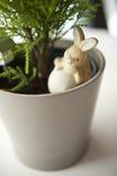 Töpfe und Kaninchen Lizenzfreies Stockfoto