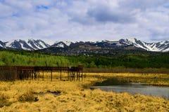 Töpfer-Sumpf Stockbilder