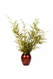 Töpferwarentöpfe können pflanzen lokalisiert mit weißem Hintergrund Stockfotografie